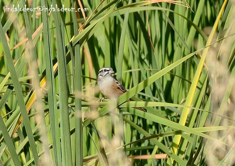 aves en cabo de gata ruta ornitologica oz nature