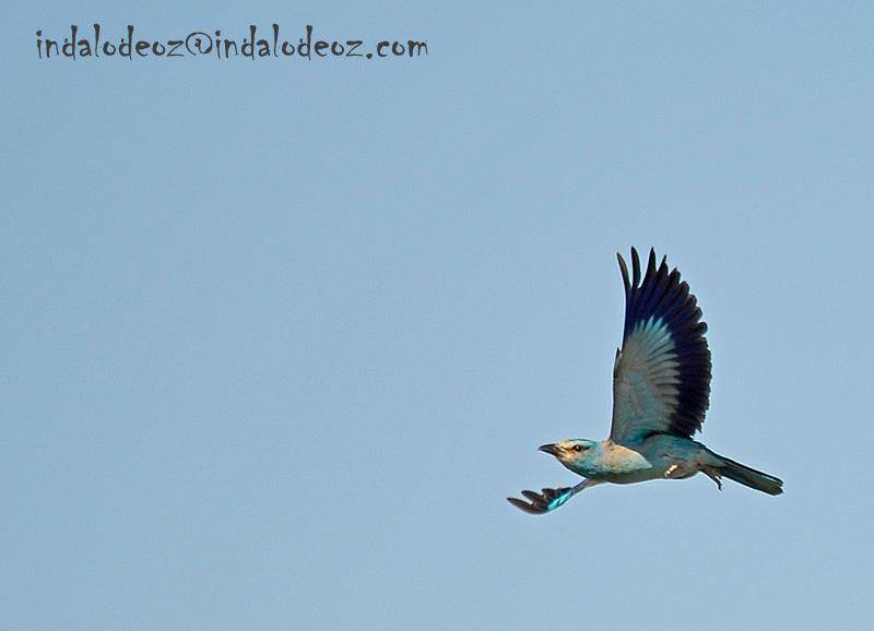 Observacion Aves Cabo de Gata