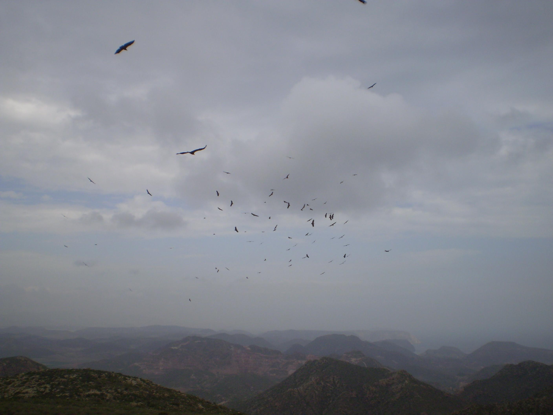 Buitres en PN Cabo de Gata Nijar