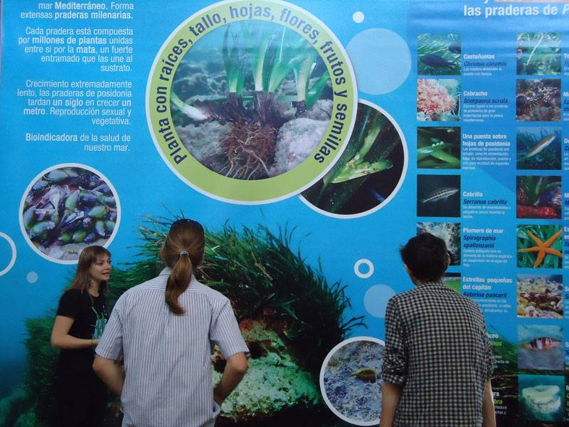 Panel de la Exposicion Posidonia Oceánica en PN Cabo de Gata Níjar
