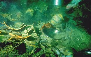 yacimiento marino catalogado de anforas romanas en el parque natural cabo de gata - nijar