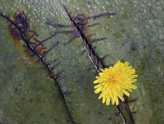 chumbera y flor cabo de gata