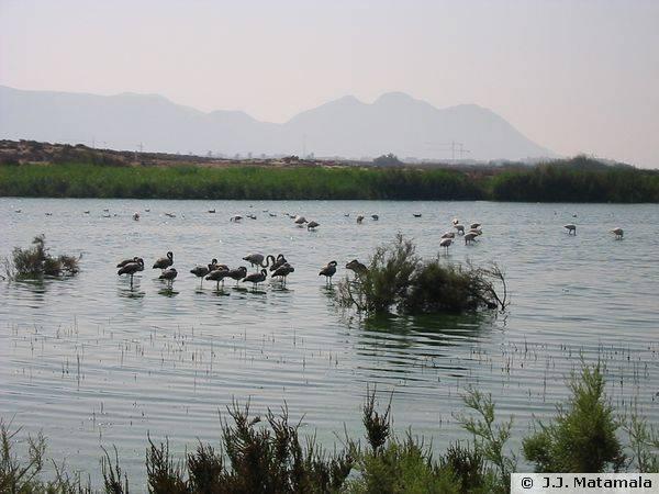 Aves Parque Natural Cabo de Gata