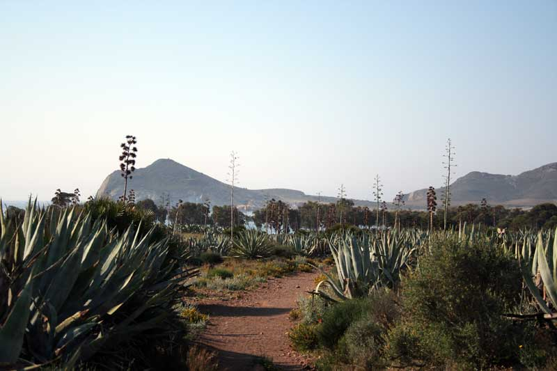 senda valle de los genoveses parque natural de Cabo de gata