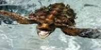 Las tortugas en el Parque Natural de Cabo de Gata