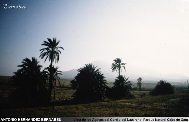 Vistas de Agaves enel Cortijo el Nazareno Cabo de Gatat