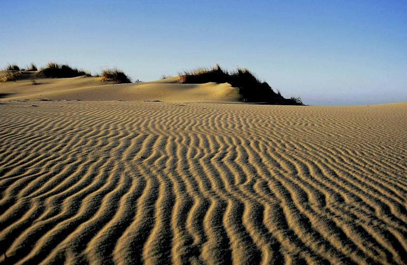Dunas  playa de los Genoveses