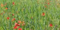 En Abril flores mil
