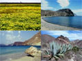 Galeria de Fotos del Parque Natural de Cabo de Gata - Nijar