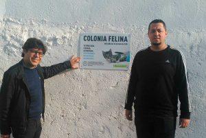 COLONIAS FELINAS 2 1 300x201