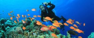 Buceo 300x122