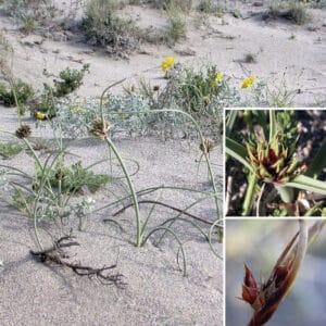 Plantas en el Cabo de Gata